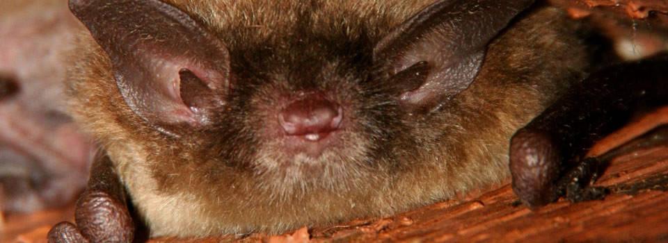 Aldine bat control